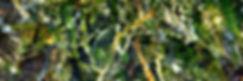 Sea Grass Key Largo, 2009.jpg