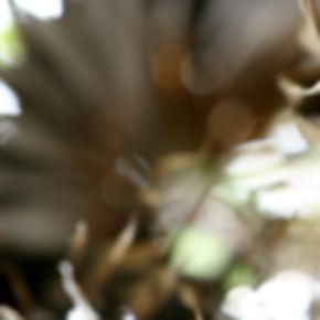 Into the Tropics I Diptych, 2009.jpg