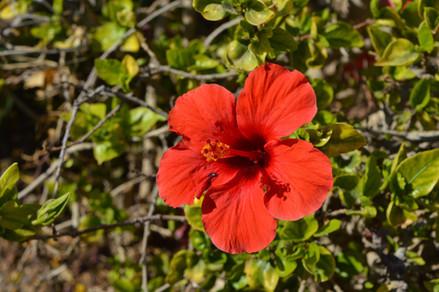 rostliny-v-egypte3.JPG