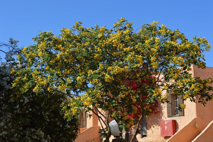 rostliny-v-egypte2.JPG