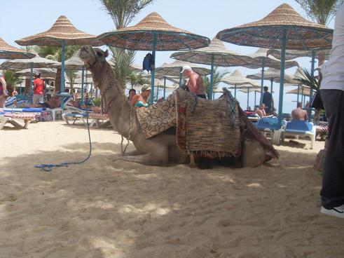 plaz-egypt2.JPG