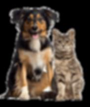 434-4346818_dog-and-cat-cat-and-dog-sitt