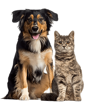 434-4346818_dog-and-cat-cat-and-dog-sitt