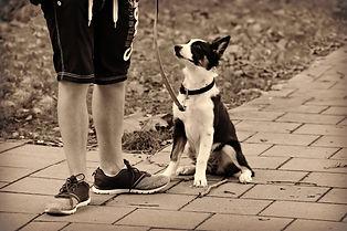 5C-Cachorro.jpg