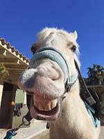 Diversión Oso Pony