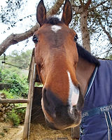 Faraó Oso Pony