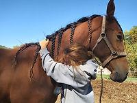 Amor a los Caballos - Oso Pony