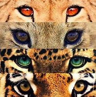 cat-eyes-295x300.jpg
