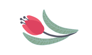 tulipan.png