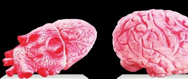 心臟及大腦