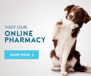 pharma dog.png