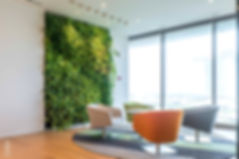 Green Wall in office Lounge