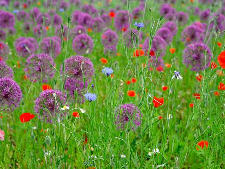 Top Tips For Rewilding Your Garden