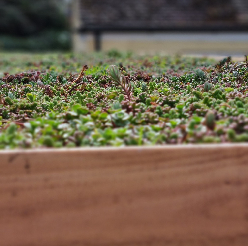 Newly installed green roof on a potting shed