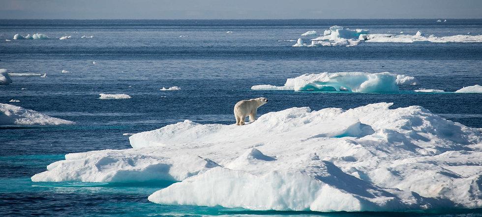 arctiqueee.jpg