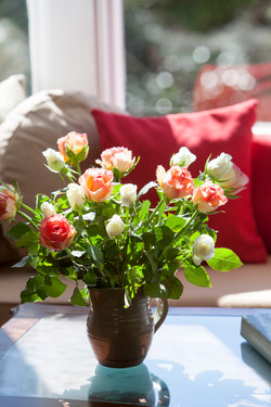 English roses bathes in sunlight