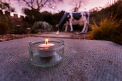 Candlelit Myrtle at dusk