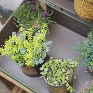 Top View of Succulent Plants