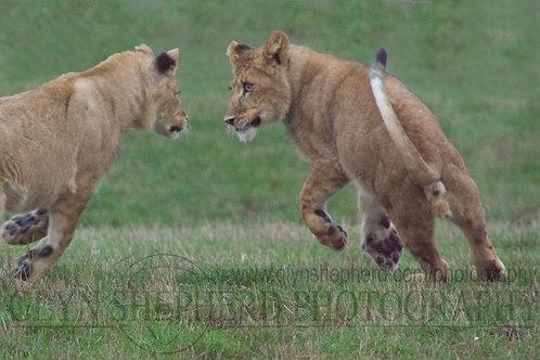 The playful kings