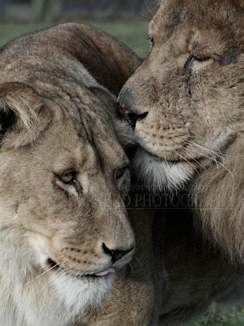 King & his Queen