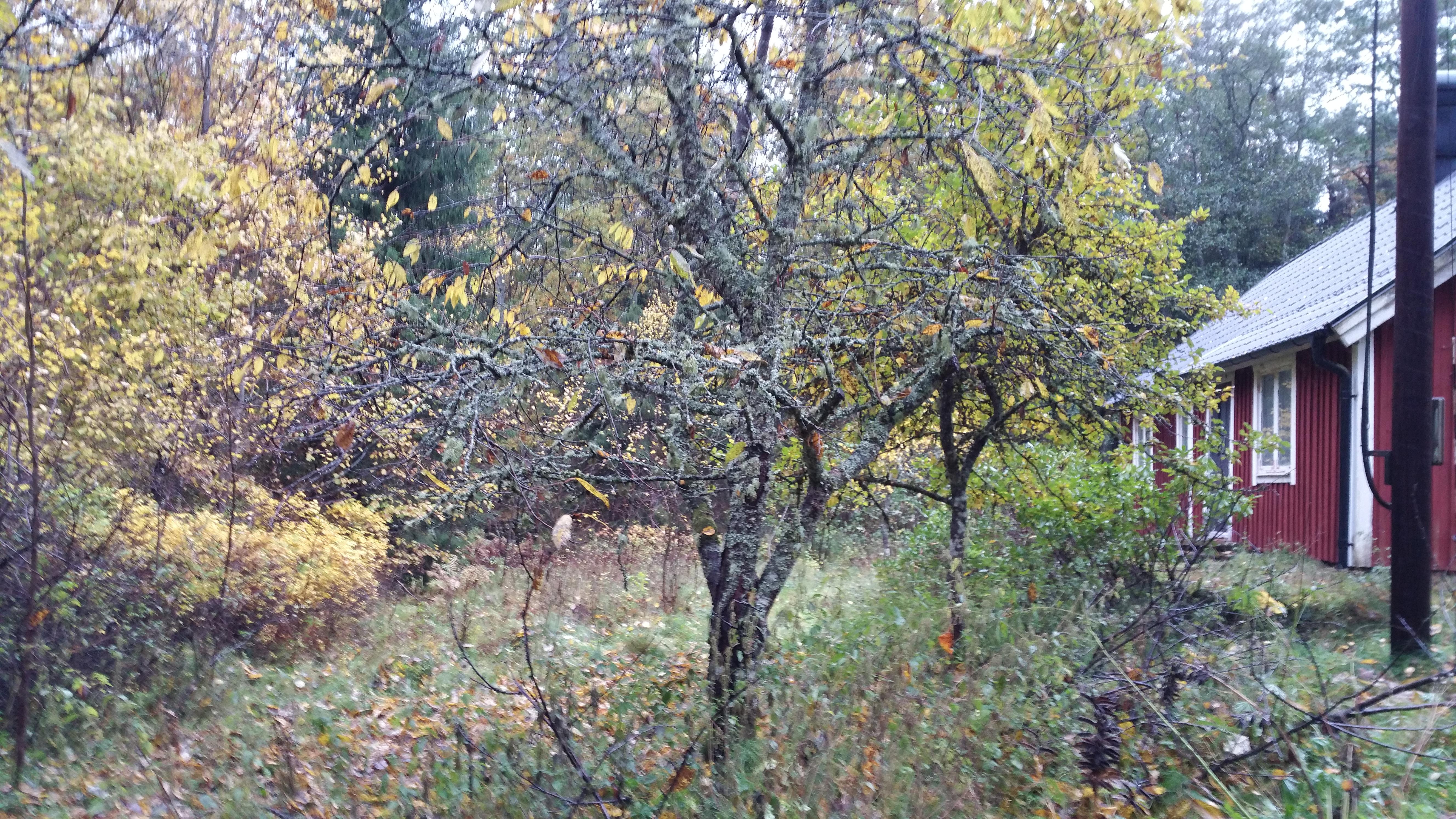 Klippning av träd och buskar