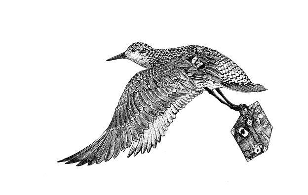 Pájaro.jpg