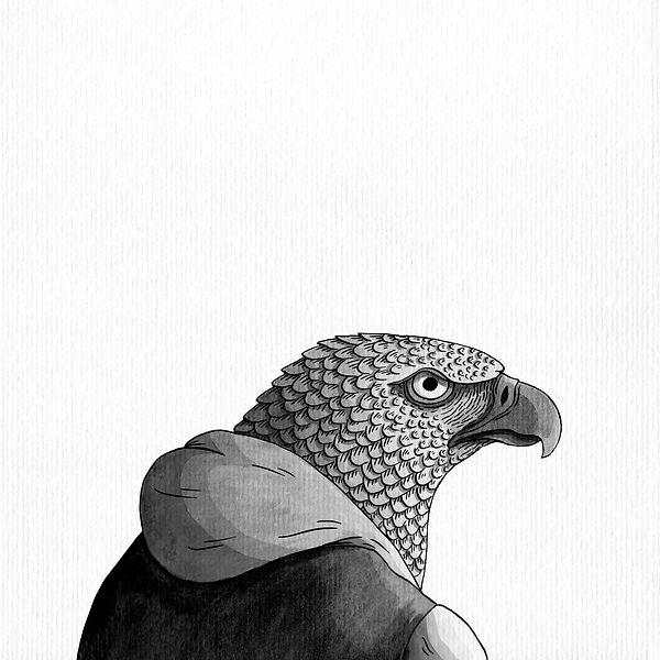águila monera.jpg