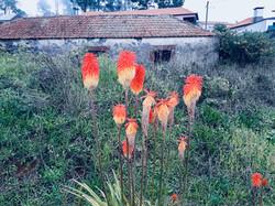 Blumen auf Wanderung