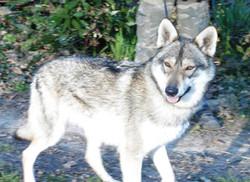 Idola Demona de la louve blanche