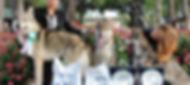 cuccioli cane lupo cecoslovacco il branco della luna piena