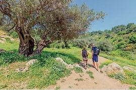 WANDERN IN ISRAEL (ABGESAGT)