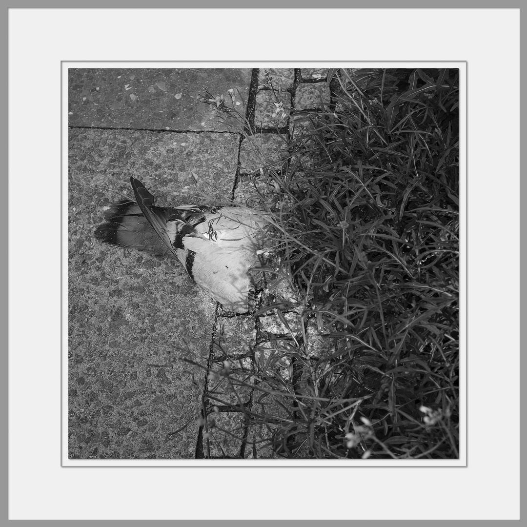 Tote Tiere Motiv 10