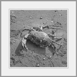 Tote Tiere Motiv 7