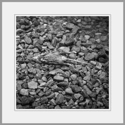 Tote Tiere Motiv 28