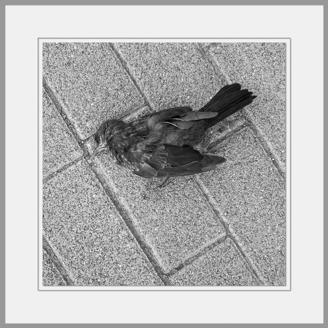 Tote Tiere Motiv 21