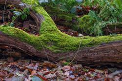 Moos und Holz / Moos and Wood
