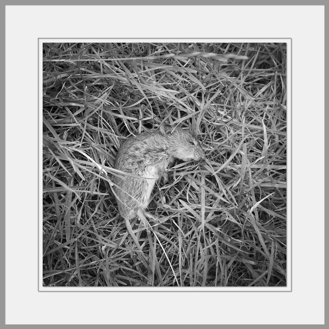 Tote Tiere Motiv 24