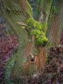 Moos und Holz 2 / Moos and Wood 2