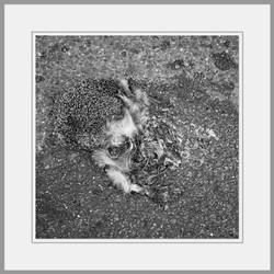 Tote Tiere Motiv 19