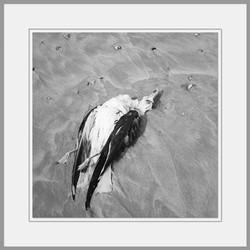 Tote Tiere Motiv 20