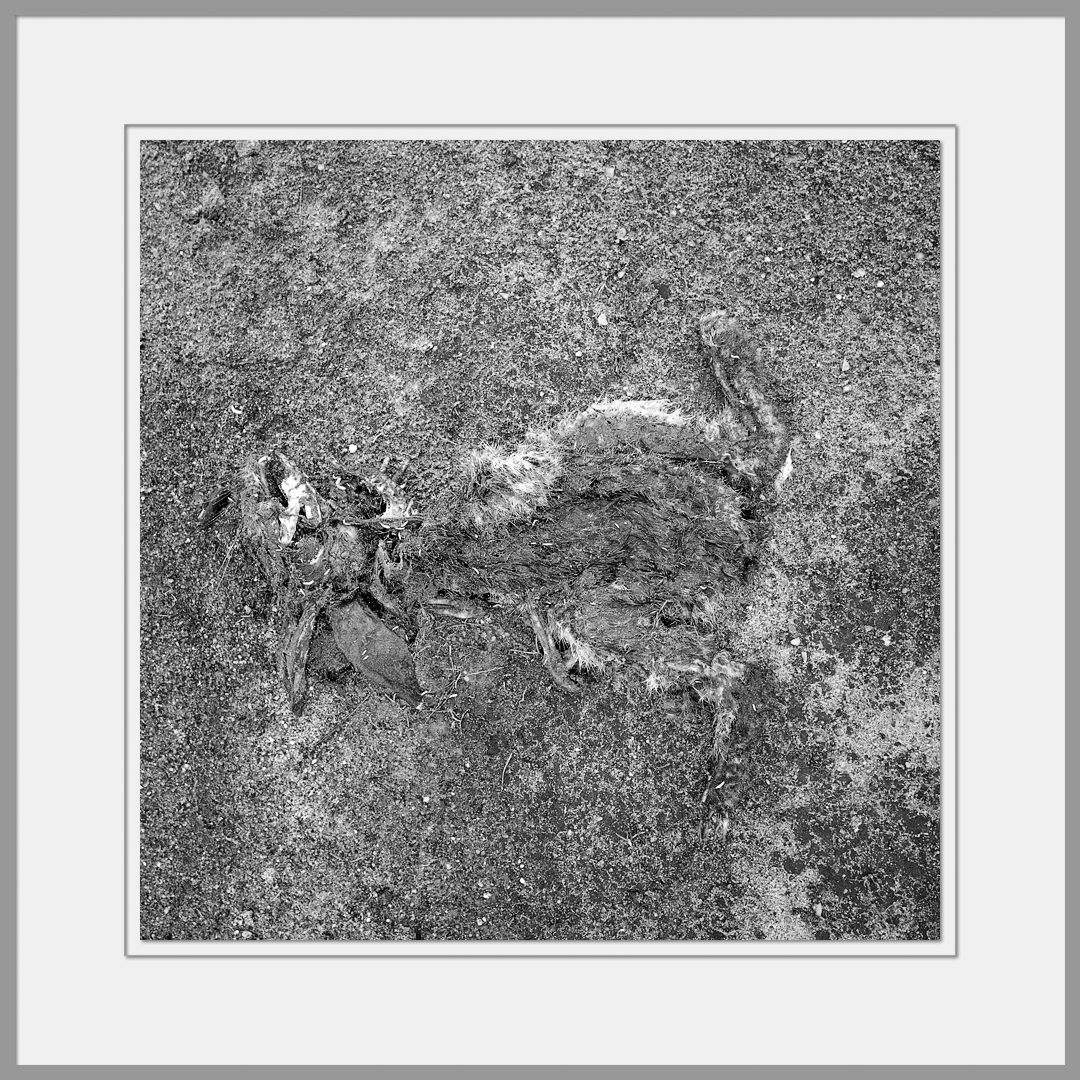 Tote Tiere Motiv 3