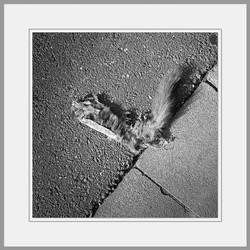 Tote Tiere Motiv 26
