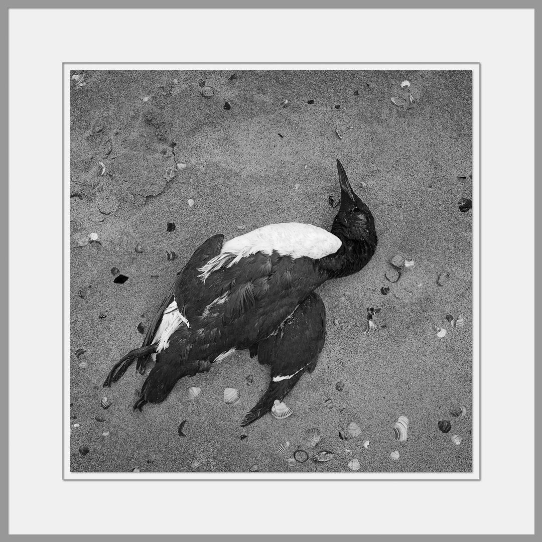 Tote Tiere Motiv 8