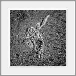 Tote Tiere Motiv 1