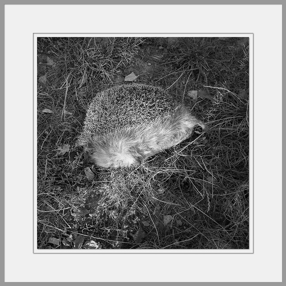 Tote Tiere Motiv 27