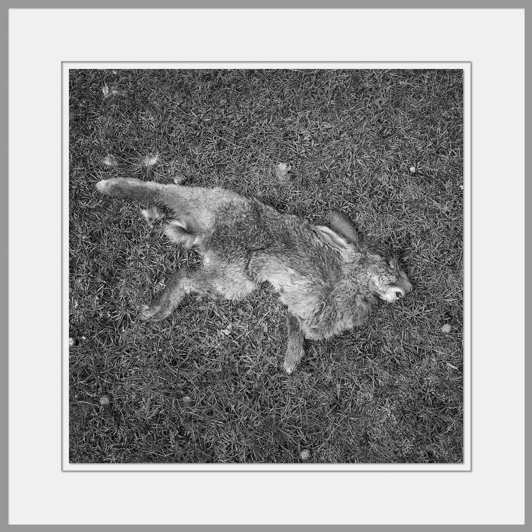 Tote Tiere Motiv 9