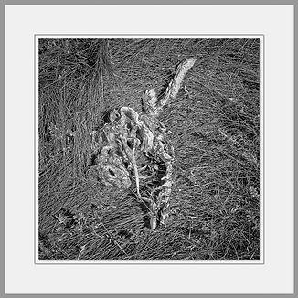 Joerg Barkholz Tote Tiere / Dead Animals