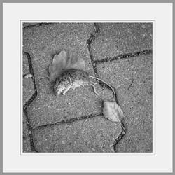 Tote Tiere Motiv 23