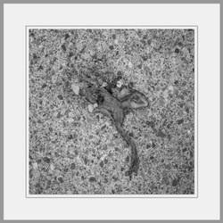 Tote Tiere Motiv 6