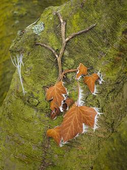 Gefrorenes Blatt / Frozen Leaf